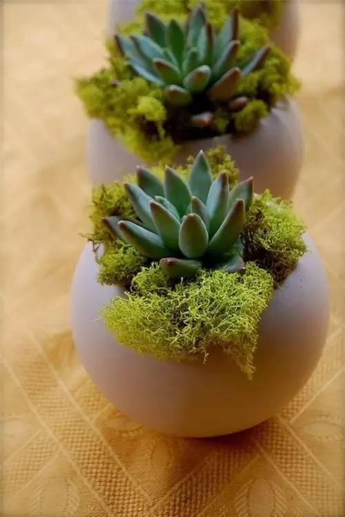 DIY gives you more fun! Planting flowers in the eggshell