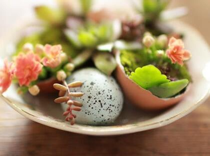 Can you plant succulents in egg shells? Home Creative Index five stars~