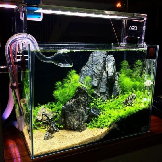 45 Stunning Aquarium Design Ideas for Indoor Decorations