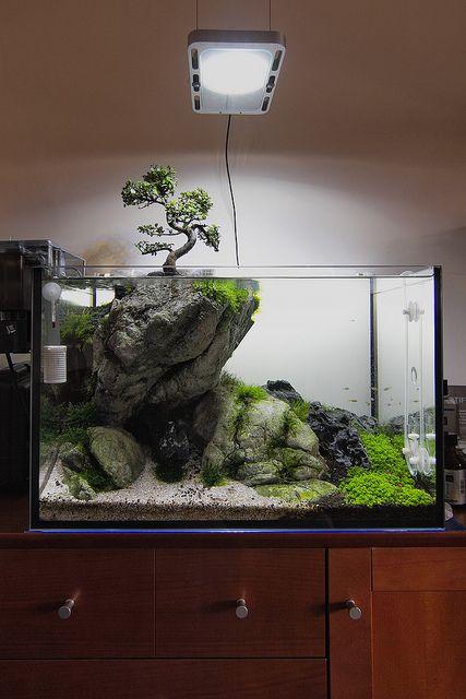 45 Stunning Aquarium Design Ideas for Indoor Decorations