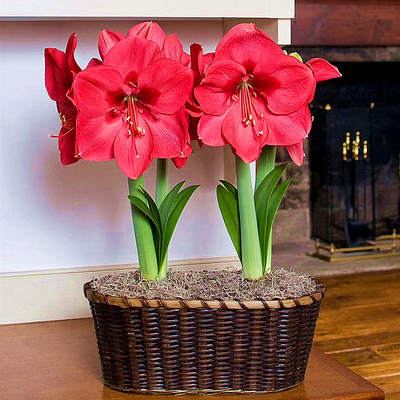 Follow This if You Want Make Beautiful Home Plant for Indoor Decorations