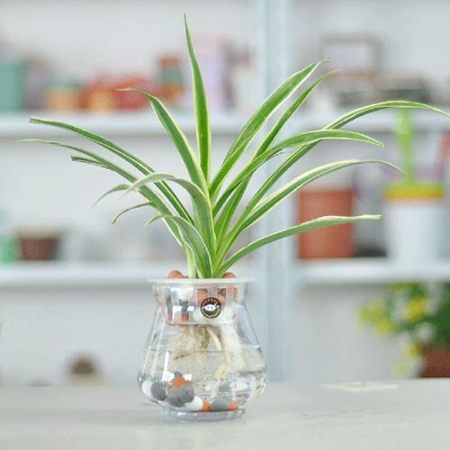 Home plants are more than just sprouting, and they are
