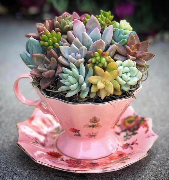 garden arrangement of plants