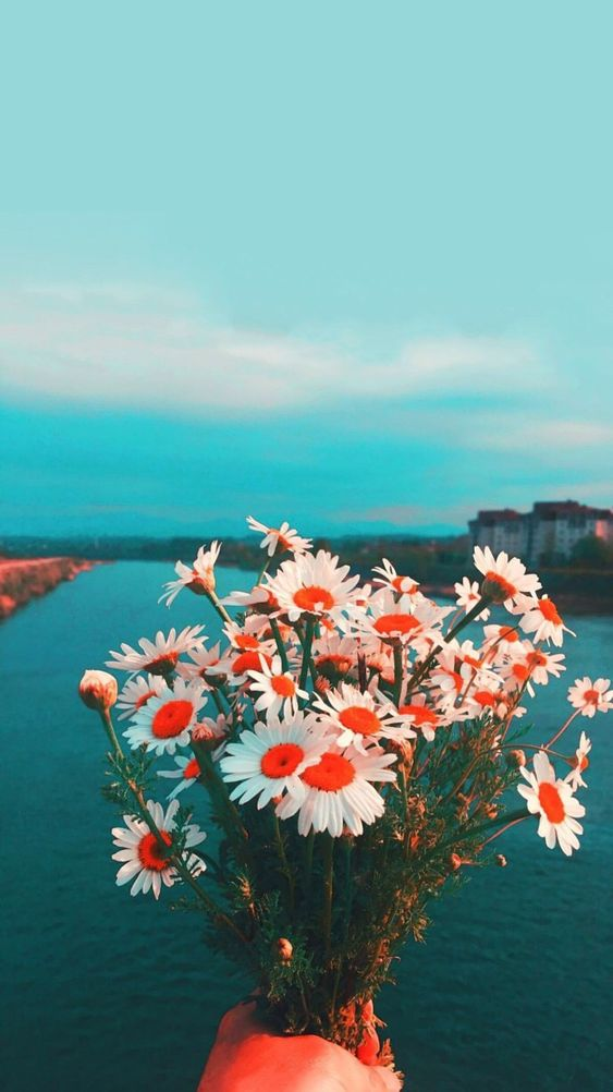 36 Elegant Flower Wallpapers You Need to Save wallpaper, flower,rose, sunflower