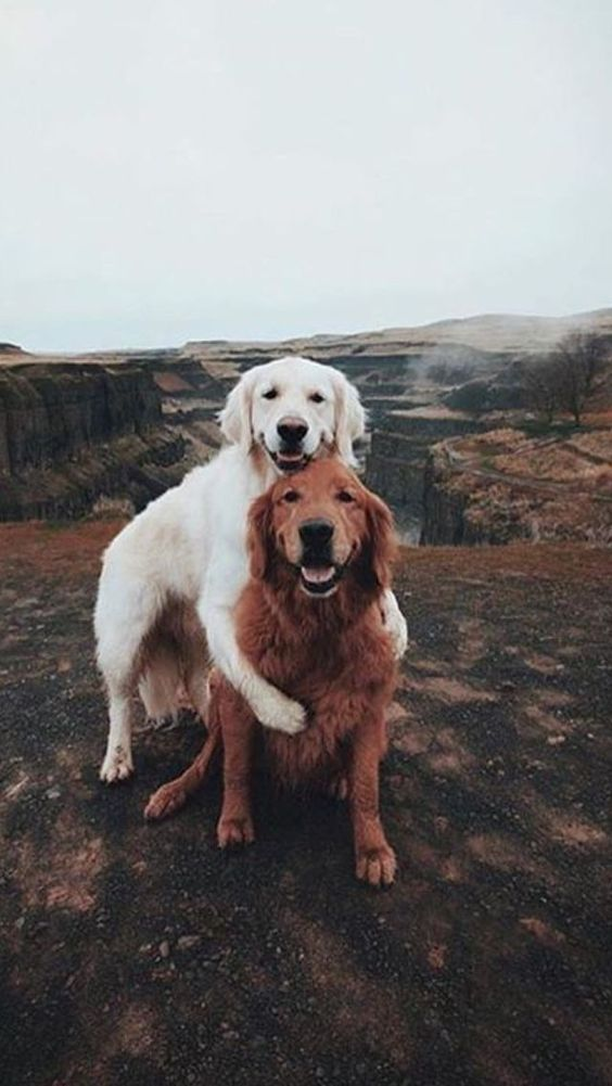 38 Some Cute and Lovely Pets Make You Have Fun pet, animal, dog, cat, rabbit, duck