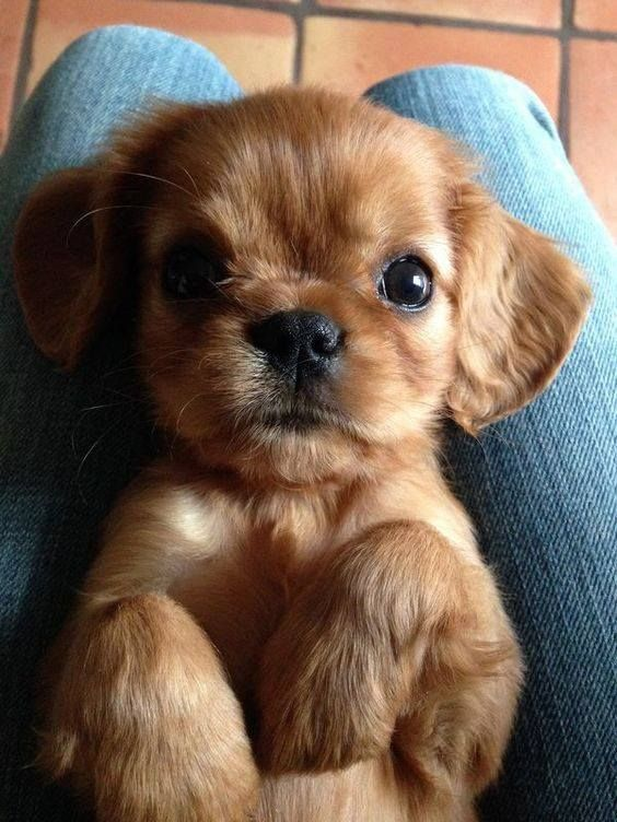 35 Puppies Who Are Far Too Cute For This World Cute dogs,Loving dogs,Amazing dogs