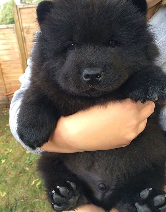 35 Cute Photos Proving Dogs  Are Furry Human Copies Funny dogs,cute dogs,baby dogs.